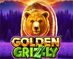 Golden Grizzly